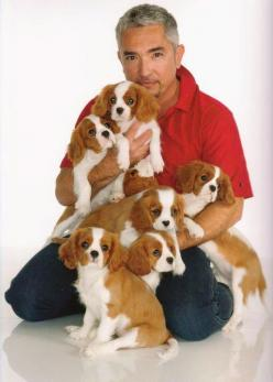 Cesar Milan with best breed ever.  Cesar Milan is the BEST too!  ........Cavalier King Charles: Cavalier Blanket, Charles Cavaliers, Animals Cavalier The, Animal College, Cavalier S, Cavalier King Charles Spaniel, Animals Trust