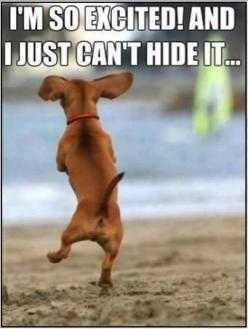 not in my backyard Dachshund Cartoons | images of dachshund dancing very excited funny dog photo with captions ...: Cute Animal, Happy Dance, Doxi, Dachshund, Funny Animal