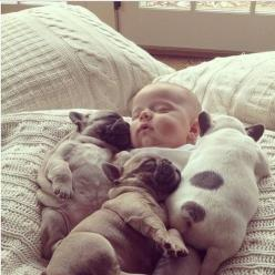 OMG!!! cute sleeping baby & puppies: Cuteness Overload, French Bulldogs, So Cute, Frenchbulldog, Cute Animals, Puppy, French Bulldog Puppies, Baby Puppies