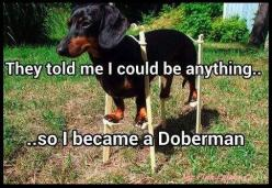 They told me I could be anything ...  ***************************************** #doberman #dog #dachshund #funny: Dream Big, Doxi, Dachshund, Funny Stuff, Funny Animal, Wiener Dogs
