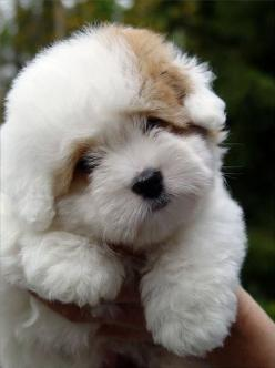 Y'all can we just take a minute and enjoy the cute things on earth it's sooooo adorable: Cute Puppies, Puppies Dogs, Puppys, Fluffy Puppies, Friend, Fluff Ball, Adorable Animal, Puppy S