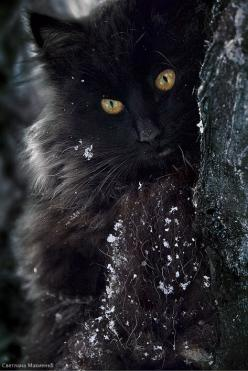 Beautiful Black Cat | mostlycatsmostly.tumblr.com