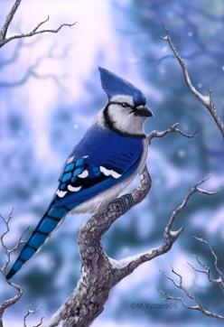 Blue Jay -- I love to put bird seed on my window sill in my home office, and then watch the Blue Jays and Cardinals flock to eat.: Blue Jay Bird, Beautiful Blue, Home Office, Blue Jays, Beautiful Birds, Animal