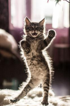 """Kitty-Cat: """"Turn up the bass, and dance like you've never danced before... Eat your heart out: 'Dancing With The Stars!' You ain't got nothing on me!"""""""
