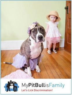 Not everyone knows that Pits were once used as nanny dogs. Meaning they stayed with the small child at all times to protect them and watch over them. What changed?