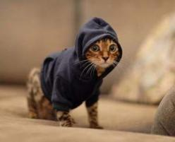 Pet Hoodies -- If your small pet struggles to stay warm during the cold winters than consider keeping Mr. Fluffums warm this winter season with these stylish pet hoodies.     http://www.amazon.com/s?field-keywords=pet%20hoodie&tag=071-20#/ref=sr_pg_1?