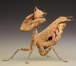Aliens on Earth: macro pictures of praying mantises and bugs by Igor Siwanowicz - Telegraph: Incredible Insects, South American, American Dead, Leaf Bugs, Dead Leaves, Dead Leaf Mantis 1886913I Jpg, Praying Mantis, Mantis Macro
