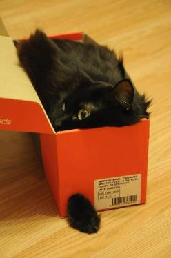 Black cat in the box - what a ninja   ...........click here to find out more     http://googydog.com: Black Cats, Cat Boxes, Crazy Cat, Kitty Kitty, Cat Trap, Shoe Box, Paw Sticking, Cat Lady