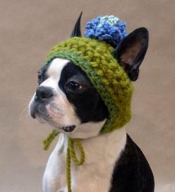 i love boston terriers...: Crochet Hat, Doggie, Doghat, Beantown Handmade, Bostonterriers, Boston S, Boston Terriers