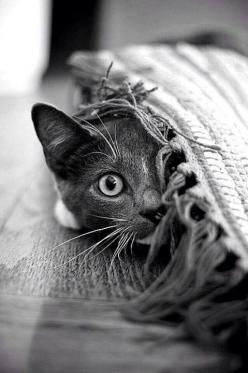 ♔ It's a cats world, kitty, kitten, killing, pet, cute, nuttet, sweet, adorable, playing hide and seek, haha, precious, furry, photo b/w.: Cats Cats, Kitty Cats, Cute Cats, Funny Cat, Peek A Boos, Kitty Kitty, Cat S, Cats Kittens