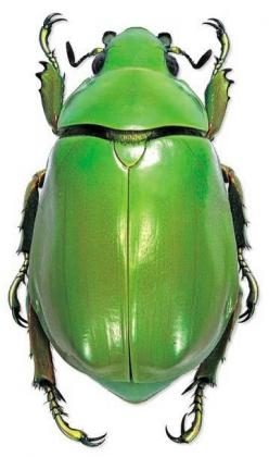Just a plain old green #beetle - but a very wonderful green.: Insects Spiders, Bugs Chrysina, June Bug, Beautiful Bugs, Beautiful Green, Bugs Bugs
