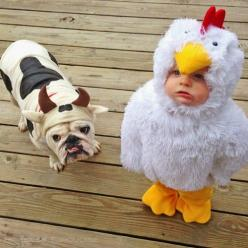 This is the Cutest picture EVER!    House of Turquoise:: Farm Animals, Bulldog Costumes, Baby Animal Costumes, Farm Animal Costume, Bulldog And Baby, Baby And Bulldog, Animal Baby Costume, Cutest Costume