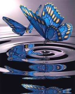this really stood out to me because its so eye catching and bold and its just really nice to look at.: Beautiful Butterflies, Blue Butterflies, Beautiful Blue, Butterfly Kisses, Blue Butterfly, Flutterby, Butterfly S