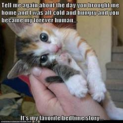 Waaah! So adorable!!: Bedtime Stories, Kitty Cats, Favorite Bedtime, Kitty Kitty, Crazy Cat, Funny Animal, Adorable Animal, Cat Lady