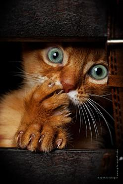 What a little beauty!: Cute Animal, Kitty Cats, Kitty Kitty, Crazy Cat, Scaredy Cat, Cat S, Horror Movie, Cats Kittens, Cat Lady