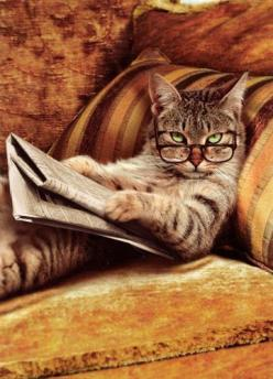 you wanted something?: Kitty Cat, Funny Cat, Pet, Book, I M Reading, Kitty Kitty, Funny Stuff, Funny Animal, Funnie