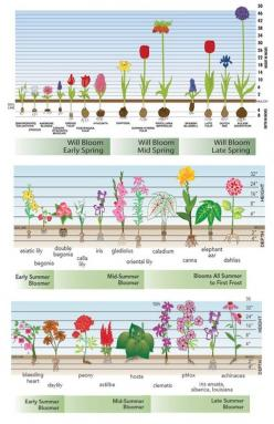 Bloom time charts for fall-planted bulbs, spring-planted bulbs and perennials. Very handy!: Fall Bulb, Fall Flower Bed, Fall Flower Garden, Bloom Time, Fall Flowerbed, Bulb Flower, Bloom Chart