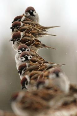 Follow the West Wind: Animals, Nature, Sparrows, Birdie, Beautiful Birds, Feathers, Photo