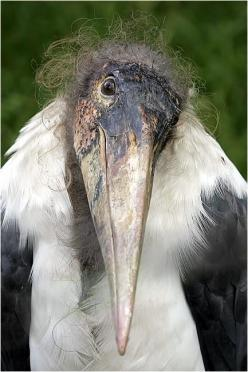 http://en.wikipedia.org/wiki/Stork  magnificent birds who bring good fortune to those on whose roofs they nest!!!