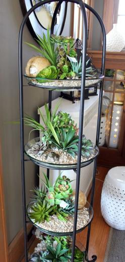 indoor succulents - love it: Houseplant, Indoor Garden, Indoor Succulent, Plant Idea
