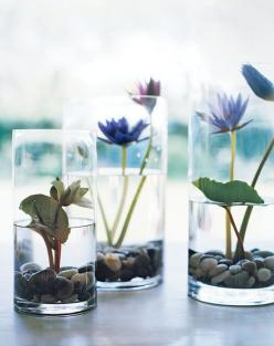 Martha's micro Lily ponds are an even smaller way to bring nature in for color and beauty.. love them.: Vase, Water Gardens, Lily Pond, Martha Stewart, Indoor Garden, Water Lily, Water Lilies, Flower