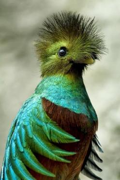 Quetzal the colors and inspiration of my guestroom