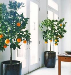 would love to do this with lemons or kumquats