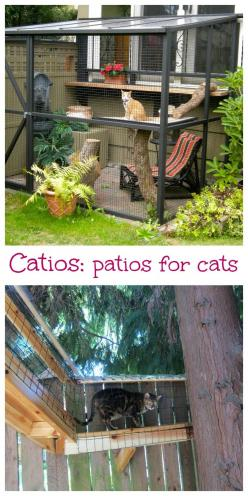 There's a new trend ()since she sheds) for outdoor decorating: catios, a patio for your cat. These enclosed cages let your cats run around outside in your backyard.: Cat Patio, Outdoor Cat Enclosure, Cat Encloser, Outdoor Cat Cage, The Idea Of ​​Build
