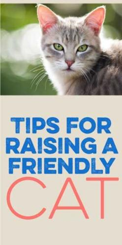 Tips For Raising A Friendly Cat! :): Evil Cat, Raising Kitten, Happy Cat, Friendly Cat, Kitten Tip, Cat Tip, Animal