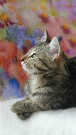 """The ideal of calm exists in a sitting cat."" --Jules Reynard: Kitty Cat, Cute Cats, Pretty Cat, Animals Cats, Kittens Cats, Cats Kittens, Funny Kitties, Cats Funny"