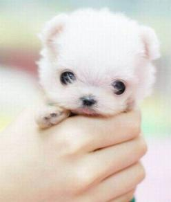 Adorable Animals | cute animals 41 Daily Awww: Oh hai cute animals, so good to see you ...: Cute Animal, Cutest Puppy, Cute Puppies, Little Puppies, So Cute, Baby Animal, Tiny Puppies, Adorable Animal