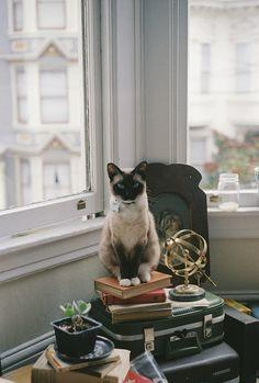 Awww... Reminds me of Montgomery and my first place in San Francisco. It had a bay window with a view much like this.