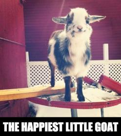 how can you not be happy from this: Cute Animal, So Cute, Cute Goat, Goat Meme, Baby Animal, Happy Goat, Baby Goats, Adorable Animal