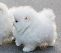 It\'s so fluffy im gonna die!! / OUR PETS (group board)