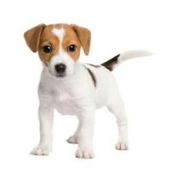 Jack Russell Terrier puppies are the cutest dogs ever! adorable: Jack Russell, Cutest Dogs, Future Pet, Place, Animal
