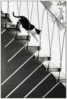 Lovely play of pattern around this cat carefully descending these steps. ~ By kirsten t on Flickr
