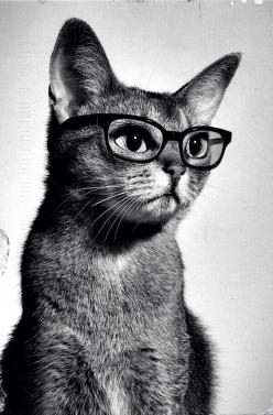 Meow, may I help you?: Nerd Cat, Hipster Cat, Studious Cat, Glasses Cat, Smart Kitty, Cats Kittens, Gatos Cats Chats, Animal