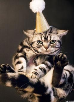 Oh great, more resolutions...: Party Animals, Kitty Cats, Not Happy, Funny Cat, Happy Birthday Cat, New Years, Birthday Cats