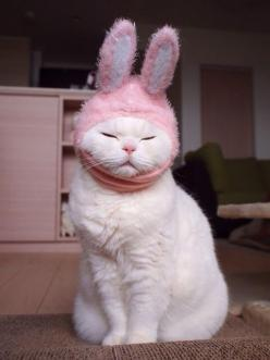 rockienolan:Omfg  fashion: Cats With Hats, Cat Face, Bunny Kitty, Bunny Hat, Easter Kitty, Easter Bunny