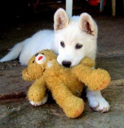 This little puppy reminds me of my first dog, Jake. It's a rare white German Shepard. These dogs are inbred so much that they tend to have the most medical problems. But they are so cute and are such good family dogs. My dog, Jake, helped me learn to