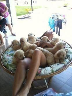 this must be what heaven looks like--ERMAHGERD DER PERPIES!!: Bucket List, Puppy Love, Golden Retrievers, Puppy Heaven, My Life, Puppy Pile, Cute Animals, Golden Retriever Puppies, Adorable Animal
