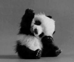 We Heart It: Baby Pandas, Adorable Animals, Cute Animals, Panda S, Baby Animals, Cute Panda, Panda Bears
