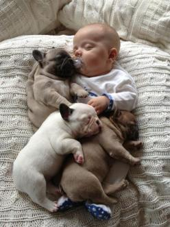 Just one of the pack!: Picture, Cuteness Overload, French Bulldogs, Sweet, So Cute, Frenchbulldog, Puppy, Baby