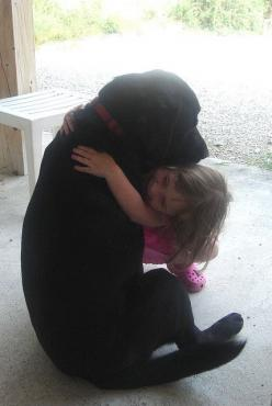 Reminds me of our sweet Sampson and Bella. He even has a red collar. I miss that big boy!: Labs Kids, Best Friends, Gentle Dogs, Kids Sweet, Sweet Labs, Labrador Lover, Black Labs, Black Labrador, Lovable Dog