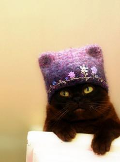 Thanks, Grandma, I love my new hat.  Really. Credit/Pinterest.: Crazy Cats, Kitty Cats, Cat Hats, Black Cats, Cats Hats, Cats In Hats, Crazy Cat Lady, Baby Kitty