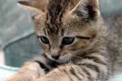 """A kitten is chiefly remarkable for rushing about like mad at nothing whatever, and generally stopping before it gets there."" --Agnes Repplier: I Love Cats, Kitty Cat, Cute Cat, Kitty Kitty, Cats And Kittens, Adorable Animal"