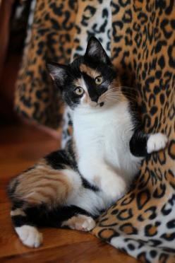 """""""Wee Fifi"""" from wee3beasties 