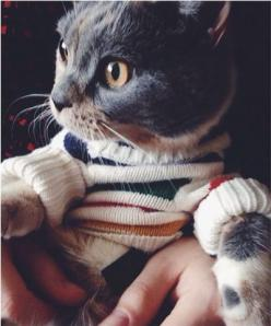 A cat in a sweater.: Cats Cats, Cats In Jumpers, Sweater Awesome, Kitty Sweaters, Sweater Awwww, Cat Sweaters, Striped Sweaters