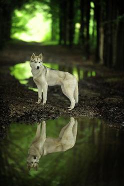 A noble animal in a beautiful setting.  This was the winner for Dog Portrait in the National Dog Photography Competition (UK), 2012: Beautiful Animals Photography, Majestic Animal, Amazing Animal