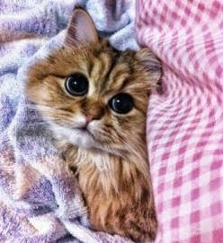 "Aww  =^..^=Thanks, Pinterest Pinners, for stopping by, viewing, re-pinning, & following my boards.  Have a beautiful day! ^..^ and ""Feel free to share on Pinterest ^..^   #catsandme #cats #doghealthcareblog: Kitty Cats, Big Eyes, Cute Cats, Cutest Cat"